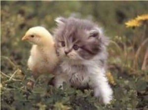 Kitty and Duck