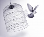 Bird out of Cage demonstrates the power of unleashing other leaders.